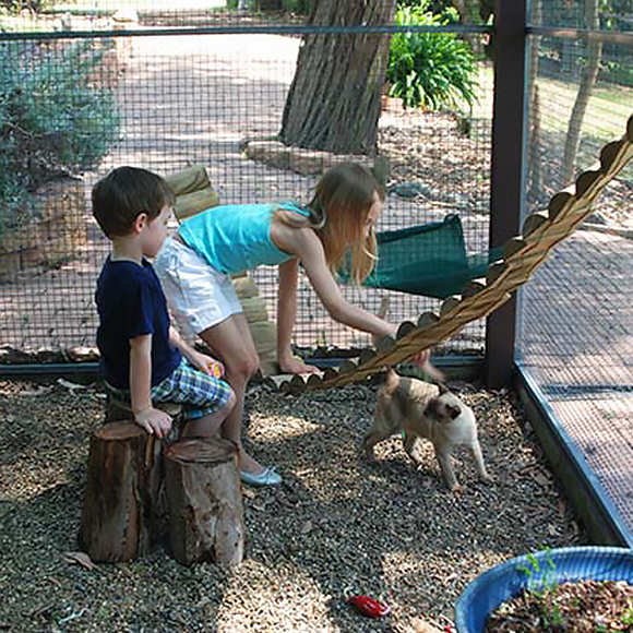 Kids playing with a cat in a cattery