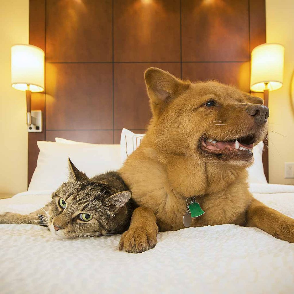 Cat and dog on a hotel bed